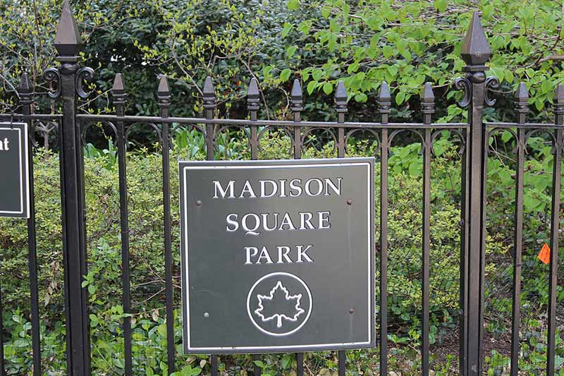 neighborhood Madison Square